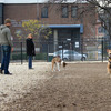 Doggies playing at Shaw Dog Park