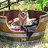 Dogs love our Barrel Beds