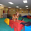 Pabby's Pet Pantry Dog Daycare