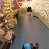 General Bead loves Frenchies!