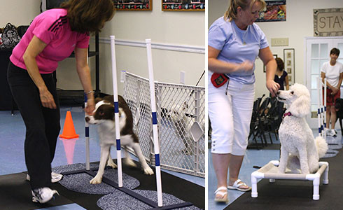 TAG (Tail Waggin - Tricks, Agility & Games!)