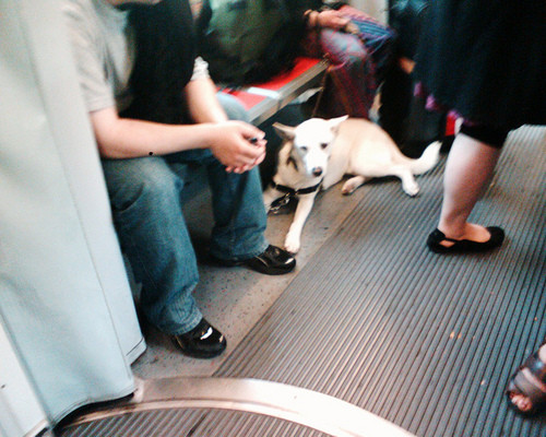 Dogs can ride Muni but not for free