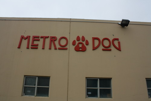 Metro dog outside