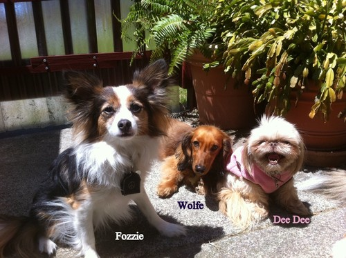 Fozzie Wolf Deedee are BFF's