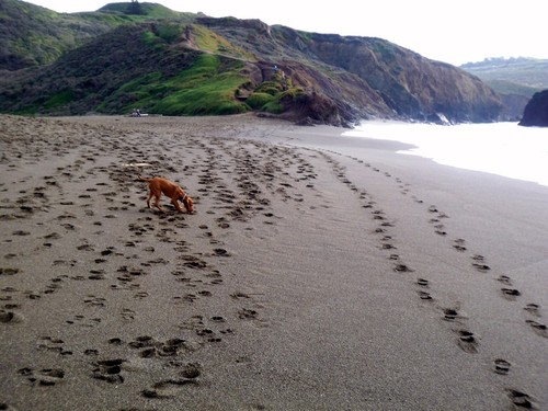 Rodeo Beach Dog