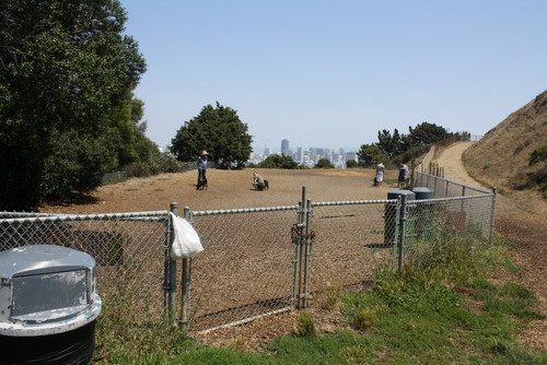 Corona Heights Dog Run