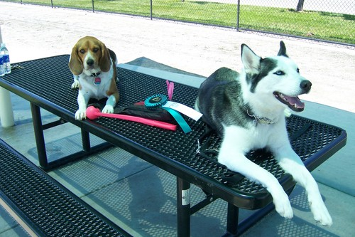 Talyn and Sasha enjoying the bench.