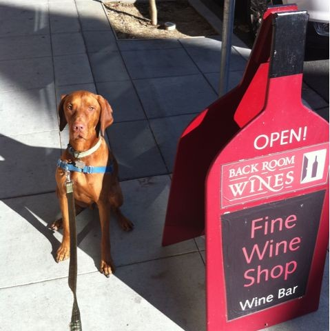 Dog friendly wine shopping in Napa