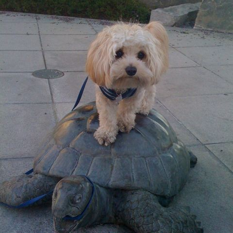 Koco and turtle
